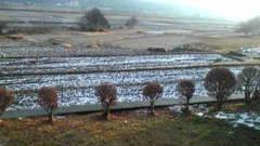 初雪です♪